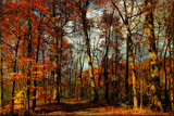 Fall Colors by tigger3, photography->nature gallery