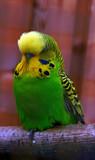 Oo's a pretty boy then.... by biffobear, photography->birds gallery