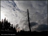 The Bare Tree.. by Dunstickin, photography->nature gallery