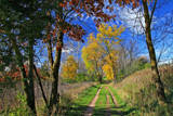 Trail Walk by Silvanus, photography->landscape gallery