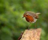 He's by biffobear, photography->birds gallery