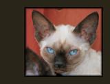 ' Old bloo eyes ' by sasraku, photography->pets gallery