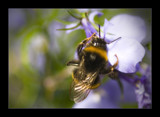 buzzzzzzzz by JQ, photography->insects/spiders gallery