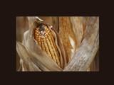 Iowa... by Lubond_III, Photography->Nature gallery