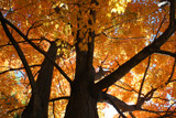 Fall Foliage by jerseygurl, photography->nature gallery