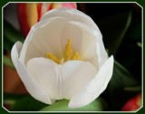 Singular by trixxie17, photography->flowers gallery
