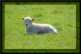 One of many by slushie, photography->animals gallery