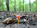 Little Mushroom by stoneytreehugger, Photography->Mushrooms gallery