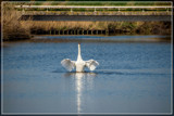 VTOL Attempt by corngrowth, photography->birds gallery