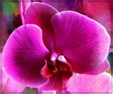 Layered Orchid by trixxie17, photography->manipulation gallery