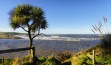 Cabbage Tree At Kakanui - Take 2 by LynEve, photography->shorelines gallery