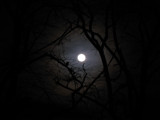 Full Moon by schleprock, Photography->Skies gallery