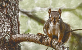 FotoSketcher Squirrel by Eubeen, photography->animals gallery