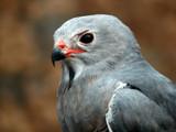 Sentry by Hottrockin, Photography->Birds gallery