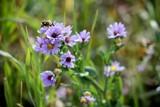 Buzzzzz by BrandyAdams77, Photography->Flowers gallery