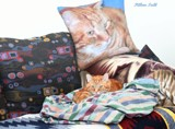 Pillow Talk by tigger3, photography->pets gallery
