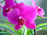 Orchid 5 by gbo911, Photography->Flowers gallery