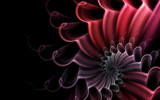 Blushing Bouquet by tealeaves, Abstract->Fractal gallery