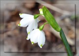 Spring Is In The Air # 8 by LynEve, photography->flowers gallery