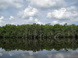 Cypress Lake II by allisontaylor, photography->shorelines gallery