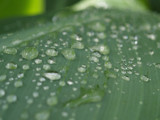 Humid drops by fra99y, Photography->Macro gallery
