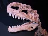 Bones2 by plumcrazy, photography->macro gallery
