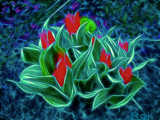 Dragons Tulip by gizmo1, photography->manipulation gallery