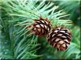Seasonal by wheedance, Photography->Nature gallery