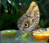 Butterfly #2 by Gabbels, Photography->Butterflies gallery