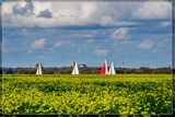 Sailing Trough A Rapeseed Field by corngrowth, photography->landscape gallery
