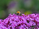 Busy by biffobear, Photography->Insects/Spiders gallery