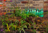 10 Green Bottles by biffobear, photography->still life gallery