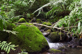 Life's Stream by bOdell, photography->nature gallery