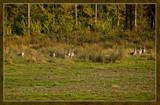 Enjoying A Forest Stroll by corngrowth, Photography->Birds gallery