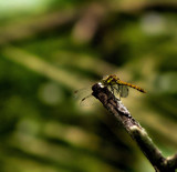 Basically Bokeh by biffobear, photography->insects/spiders gallery