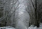 Snowy cold walk over bridge by owldgirl, photography->landscape gallery