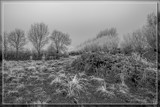 Winter In The Polder by corngrowth, contests->b/w challenge gallery