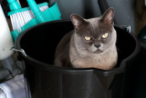 That Ain't No Bucket Of Chicken by braces, photography->pets gallery