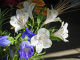 Bouquet For Friday by jerseygurl, photography->flowers gallery