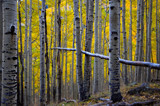 Vertical trees with a Horizontal tree by jeenie11, photography->nature gallery