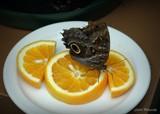 Butterflies by GIGIBL, photography->butterflies gallery