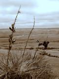 Western Nebraska by antonia02, Photography->Landscape gallery