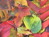 Colorful buffet by ekowalska, contests->Fall Festivities gallery