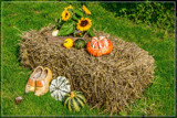 Dutch Fall Display by corngrowth, photography->general gallery