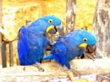 Pause déjeuner chez les perroquets by dadaetmoi, photography->birds gallery