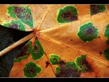 Leafed All Over by photoimagery, Photography->Macro gallery