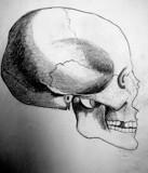 Skeletal Portrait by jttigereye, Illustrations->Traditional gallery
