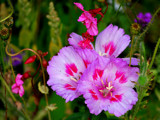 Country Garden Flowers by braces, Photography->Flowers gallery