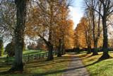 Golden Lane #1 by krt, Photography->Landscape gallery