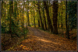 To The Forest Edge 1 by corngrowth, photography->nature gallery